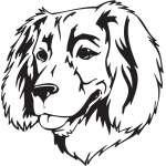 Boykin Spaniel Dog Sticker