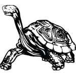 Turtle Sticker 4