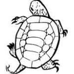 Turtle Sticker 23